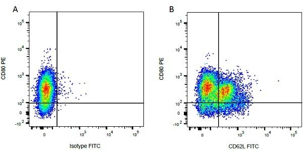 Anti Bovine CD80 Antibody, clone IL-A159 thumbnail image 5
