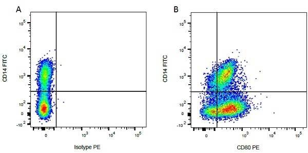 Anti Bovine CD80 Antibody, clone IL-A159 thumbnail image 6