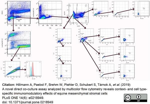 Anti Bovine Interferon Gamma Antibody, clone CC302 thumbnail image 11