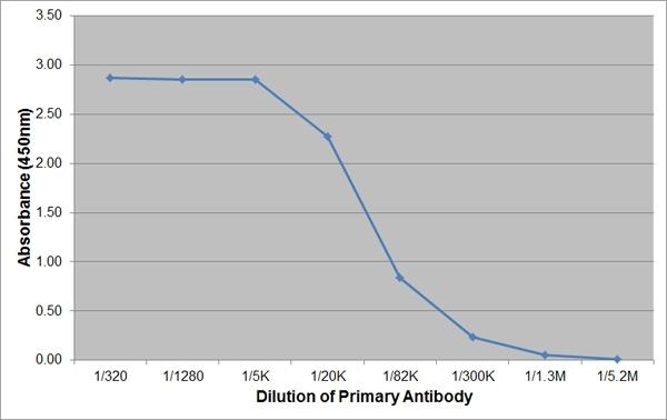 Anti Bovine/Ovine IgA Antibody, clone K84 2F9 thumbnail image 1
