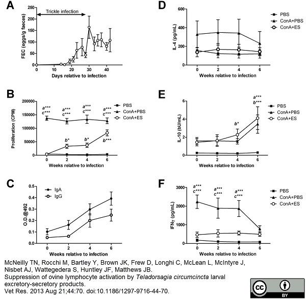 Anti Bovine/Ovine IgA Antibody, clone K84 2F9 thumbnail image 2
