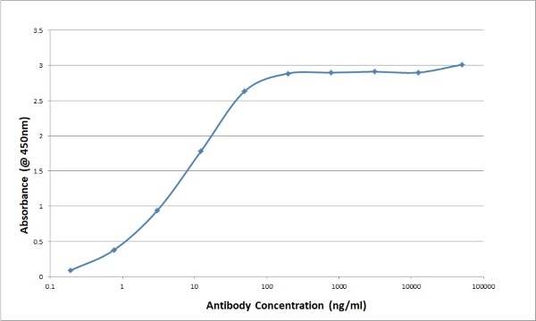 Anti Bovine/Ovine IgG/A/M Antibody, clone K67 3G2 thumbnail image 1