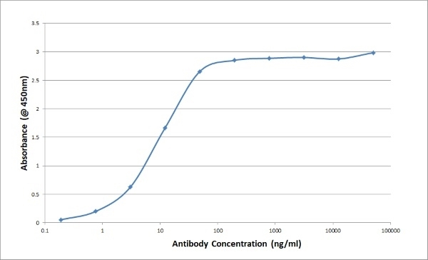 Anti Bovine/Ovine IgG/A/M Antibody, clone K67 3G2 thumbnail image 2