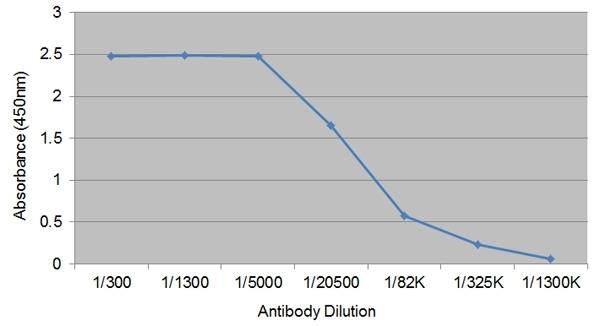 Anti Bovine IgG1 Antibody, clone IL-A60 gallery image 1