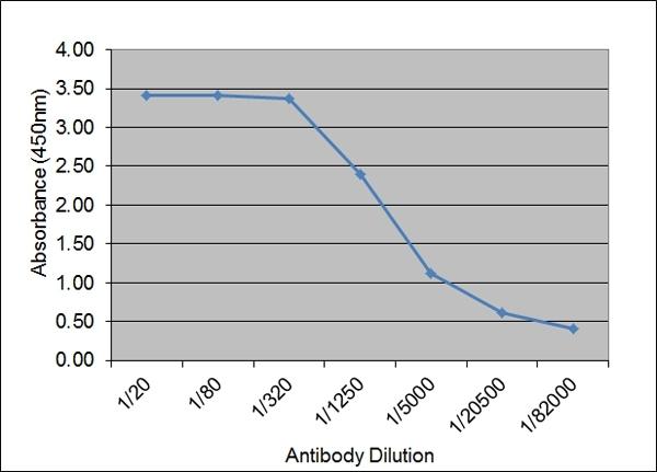 Anti Bovine IgM Antibody, clone IL-A30 thumbnail image 2