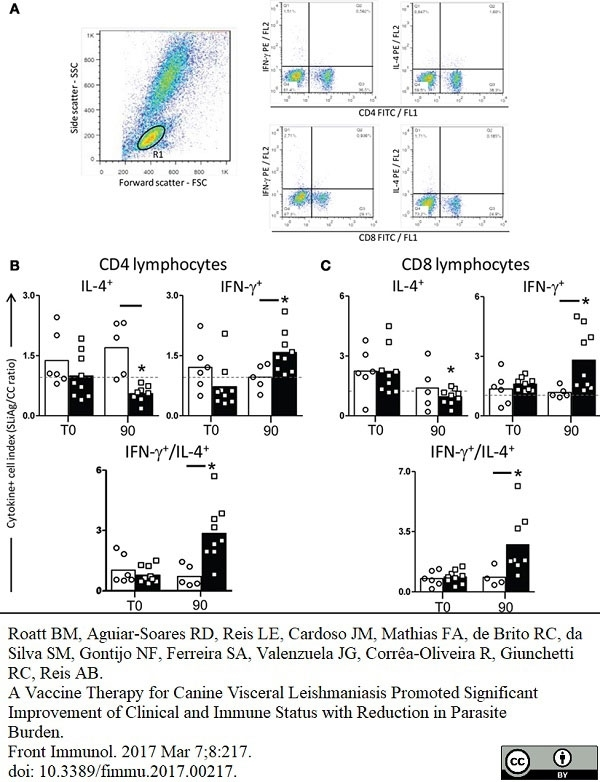 Anti Bovine Interleukin-4 Antibody, clone CC303 thumbnail image 3