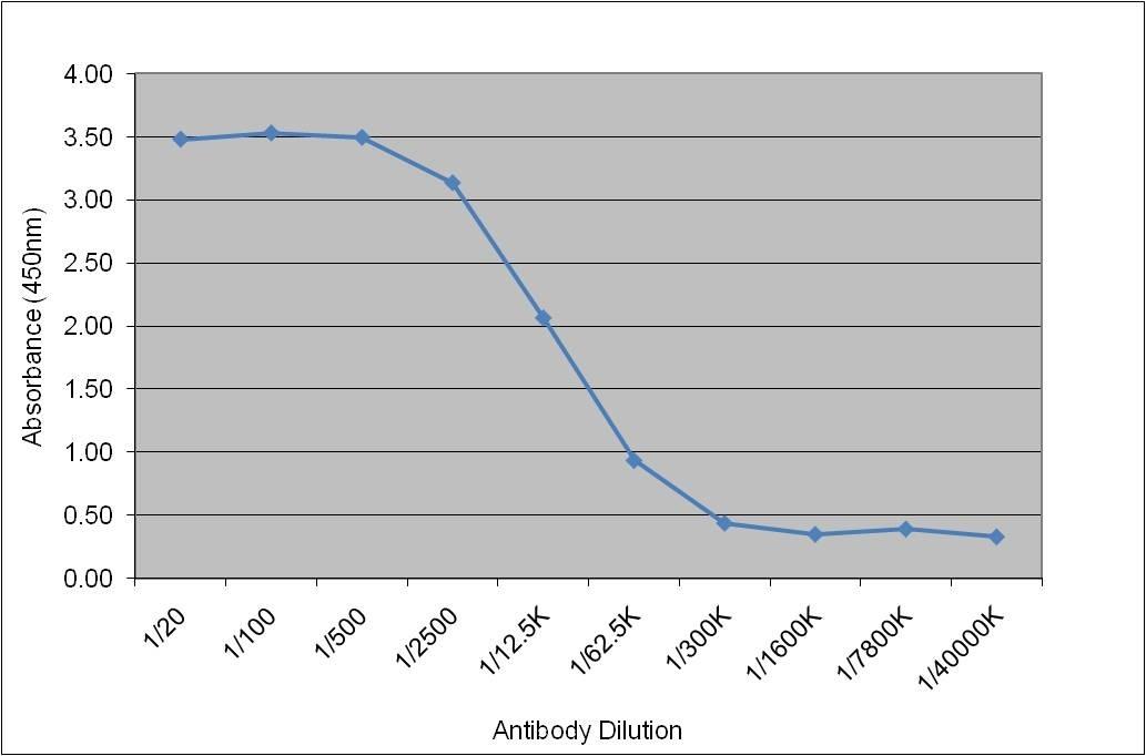 Anti Lipoprotein Lipase Antibody, clone 5D2 thumbnail image 1