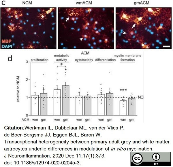Anti MBP (aa82-87) Antibody, clone 12 thumbnail image 45