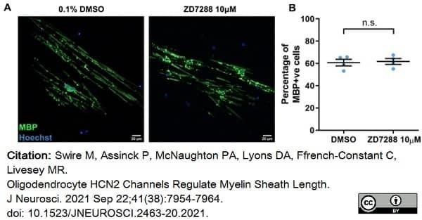 Anti MBP (aa82-87) Antibody, clone 12 thumbnail image 53