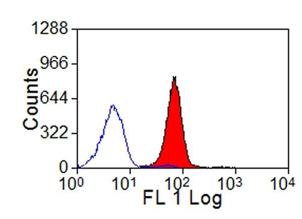 Anti Bovine MHC Class I Monomorphic Antibody, clone IL-A88 thumbnail image 1