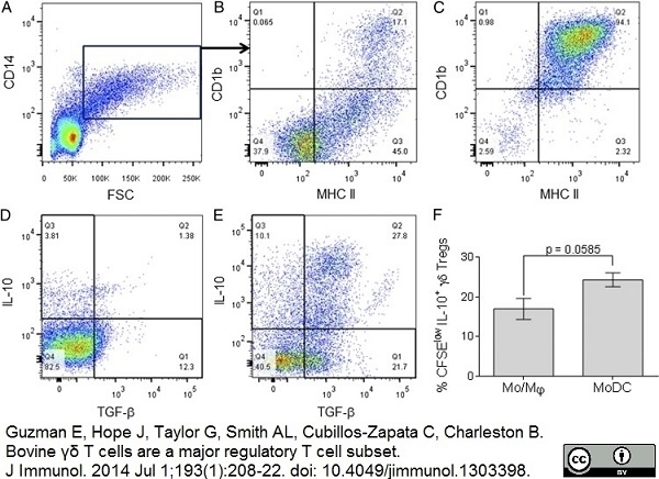 Anti Bovine MHC Class II DR Antibody, clone CC108 thumbnail image 5