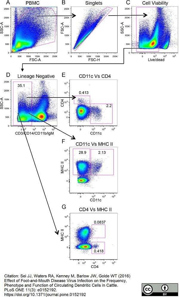 Anti Bovine MHC Class II Monomorphic Antibody, clone IL-A21 thumbnail image 5