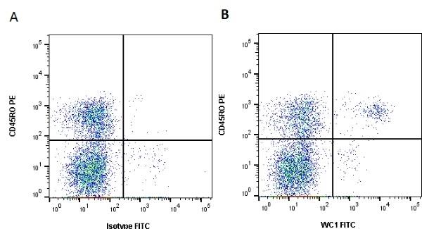 Anti Bovine WC1 Antibody, clone CC15 thumbnail image 1