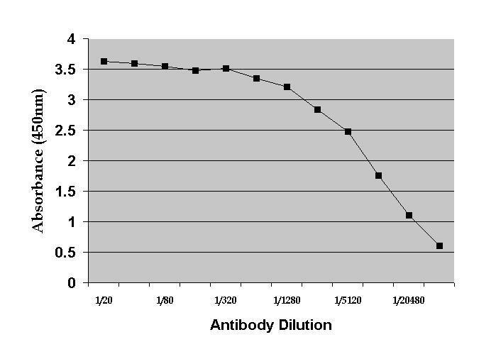 Anti Dehydroepiandrosterone Antibody, clone DHEA(-3):1-19.1 (BGN/117/1191) gallery image 1