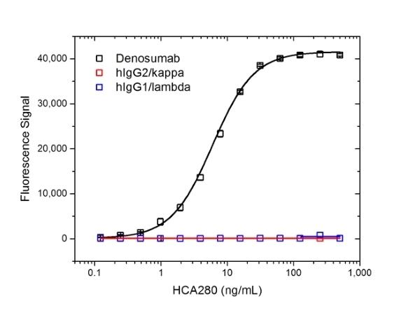 Anti Denosumab Antibody, clone AbD26295_hIgG1 thumbnail image 2