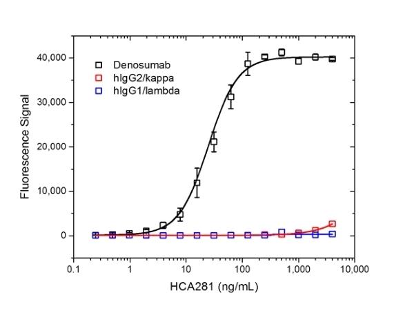 Anti Denosumab Antibody, clone AbD26296_hIgG1 thumbnail image 2