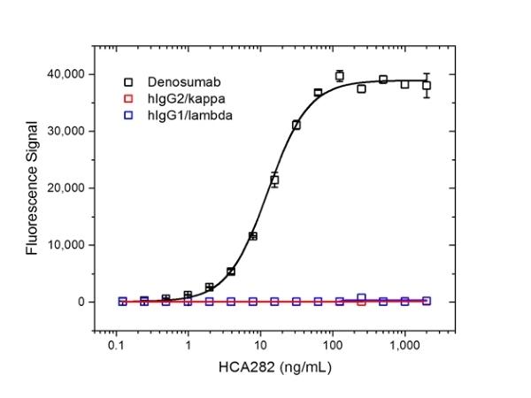 Anti Denosumab Antibody, clone AbD26862_hIgG1 thumbnail image 2