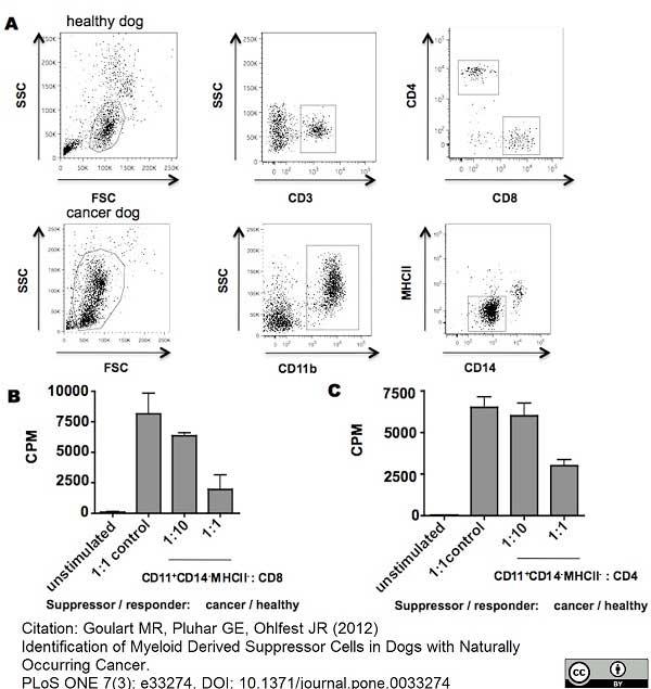 Anti Dog CD11b Antibody, clone CA16.3E10 thumbnail image 2