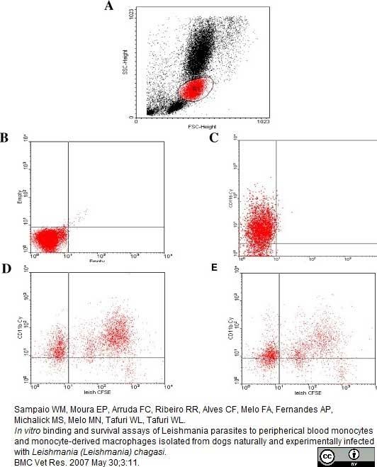 Anti Dog CD11b Antibody, clone CA16.3E10 thumbnail image 5