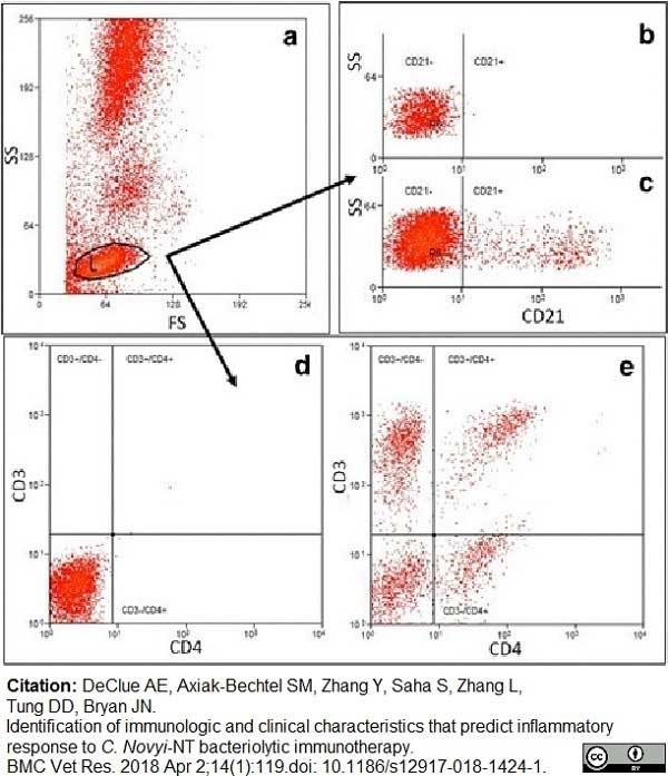 Anti Canine CD21 Antibody, clone CA2.1D6 thumbnail image 4