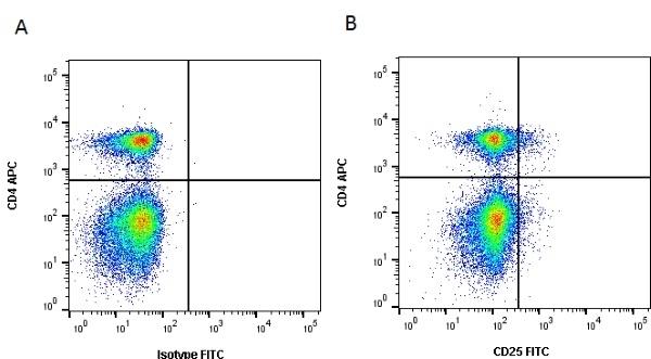 Anti Dog CD25 Antibody, clone P4A10 thumbnail image 2