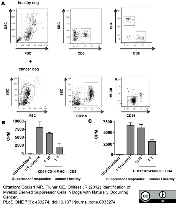 Anti Dog CD3 Antibody, clone CA17.2A12 thumbnail image 10