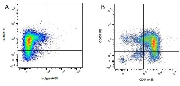 Anti Dog CD44 Antibody, clone YKIX337.8.7 thumbnail image 3