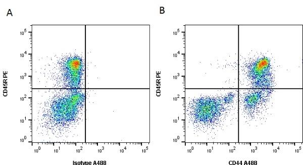 Anti Dog CD44 Antibody, clone YKIX337.8.7 thumbnail image 4