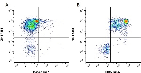 Anti Dog CD45R Antibody, clone YKIX753.22.2 thumbnail image 3