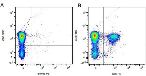 Anti Dog CD8 Antibody, clone YCATE55.9 thumbnail image 5