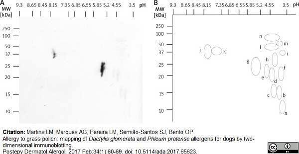 Anti Dog IgE Antibody, clone E6-71A1 thumbnail image 1