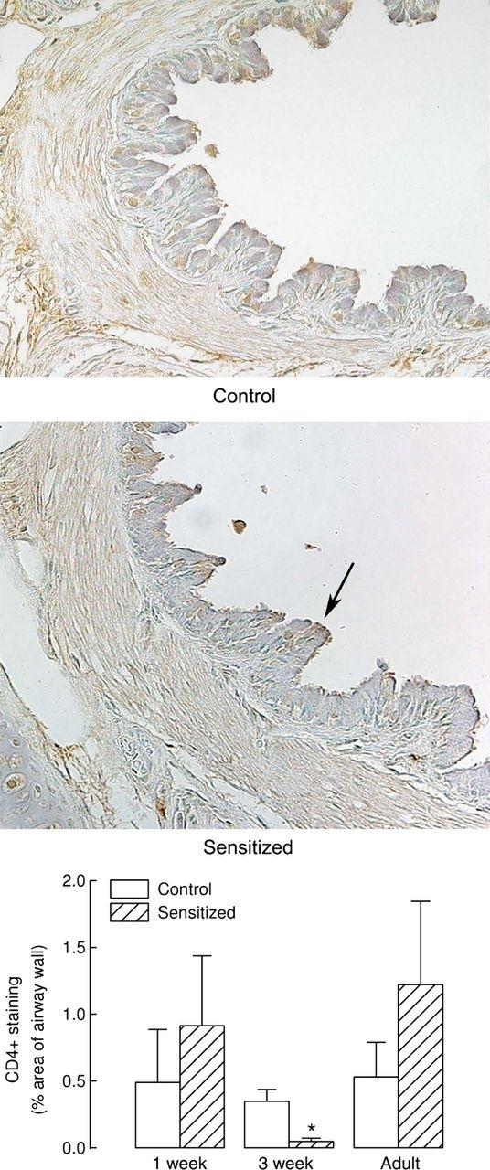 Anti Guinea Pig CD4 Antibody, clone CT7 thumbnail image 3