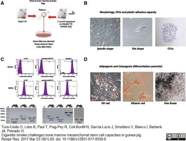 Anti Guinea Pig CD45 Antibody, clone IH-1 gallery image 1