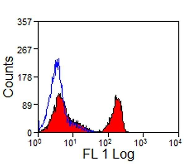 Anti Horse CD4 Antibody, clone CVS4 thumbnail image 1