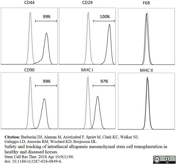 Anti Horse CD44 Antibody, clone CVS18 thumbnail image 7
