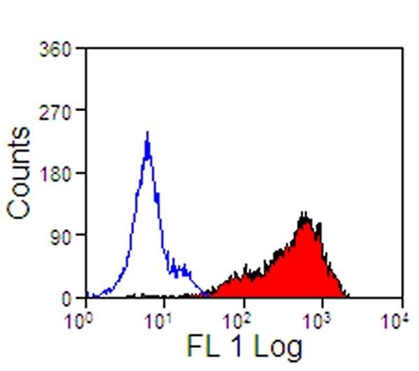 Anti Horse CD5 Antibody, clone CVS5 thumbnail image 2