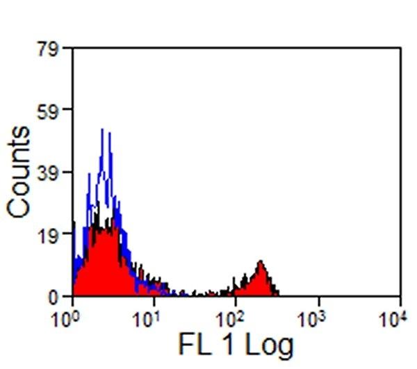 Anti Horse CD8 Antibody, clone CVS8 thumbnail image 2
