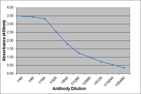 Anti Horse IgE Antibody, clone 3H10 thumbnail image 2