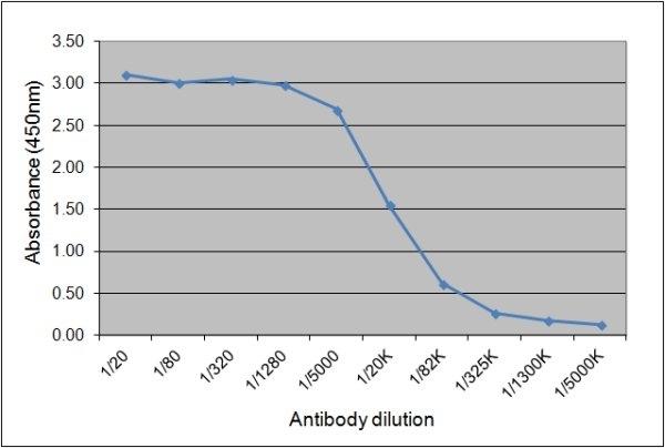Anti Horse IgGa Antibody, clone CVS48 gallery image 1