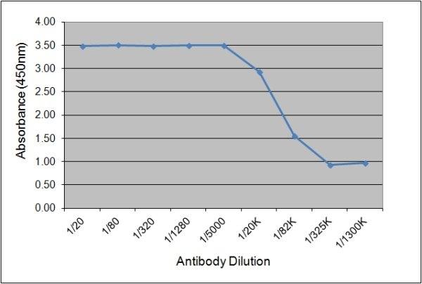 Anti Horse IgGb Antibody, clone CVS39 gallery image 1