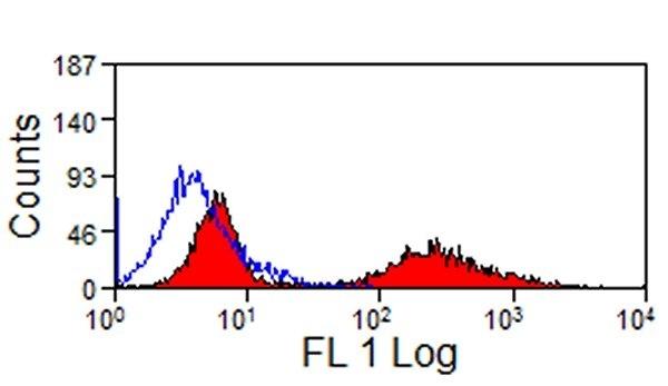 Anti Horse MHC Class II Monomorphic Antibody, clone CVS20 thumbnail image 1