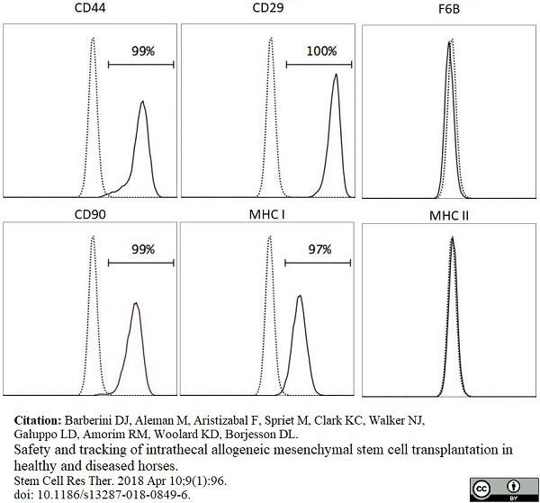 Anti Horse MHC Class II Monomorphic Antibody, clone CVS20 thumbnail image 4