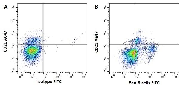 Anti Horse Pan B-Cells Antibody, clone CVS36 thumbnail image 4
