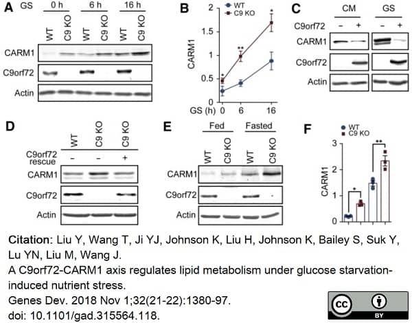 Anti C9orf72 Antibody, clone B01-5F2 (PrecisionAb Monoclonal Antibody) thumbnail image 6
