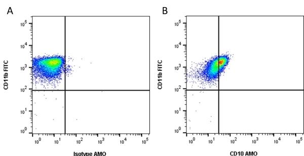 Anti Human CD10 Antibody, clone SN5c thumbnail image 1