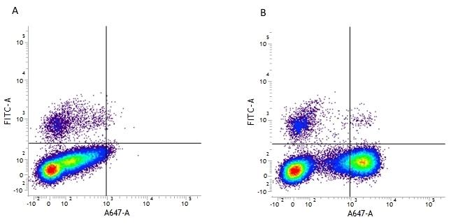 Anti Human CD10 Antibody, clone SN5c gallery image 1