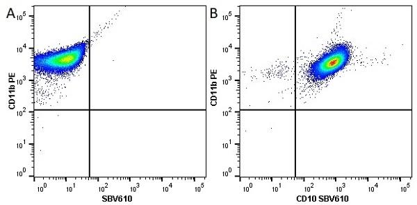Anti Human CD10 Antibody, clone SN5c thumbnail image 5