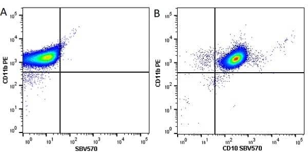 Anti Human CD10 Antibody, clone SN5c thumbnail image 6