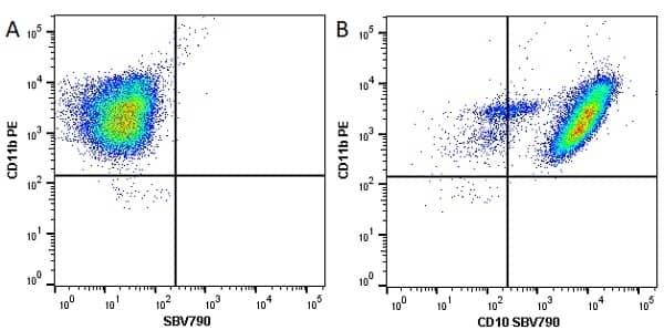 Anti Human CD10 Antibody, clone SN5c thumbnail image 8