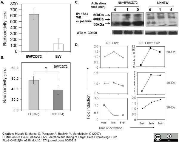 Anti Human CD100 Antibody, clone A8 thumbnail image 3